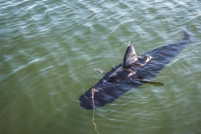 Ghostswimmer – Le drone détecteur de mines